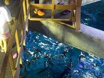 【足摺海洋館 えさやり体験】魚たちが集まってきました♪