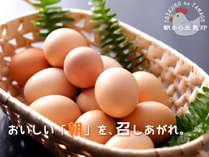小型ながらに黄身が濃い!卵かけごはんにおすすめの地鶏『土佐ジローの卵』 抜群の美味しさをどうぞ♪