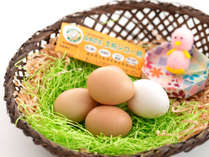 【土佐ジローの卵】 小さいけれどとっても美味!!おひとつ100円でご購入いただけます♪