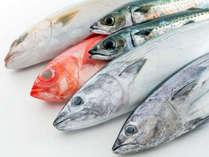 【こだわりの食材】[足摺の魚たち] 鰹にクエにスズキにイサキ♪獲れたての鮮魚をお席にお持ちします!