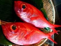 金目鯛の姿煮と伊勢海老のお造り付 (よくばりプラン)