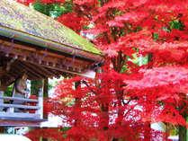まさしく燃えるような紅葉です。見事なもみじをぜひ見に来てください。