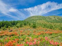 湯の丸山を赤く染める【60万株のレンゲツツジを見よう】湯の丸高原ガイドウォーク