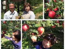 【マイカーで行く】りんご狩り体験と試食食べ放題付きプラン