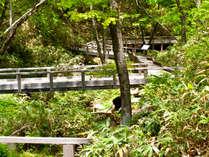 遊歩道【清流の小径】は自然散策のコースとしても人気です