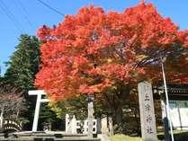 【土津神社】11月7日の写真です。13日頃までが見頃です♪