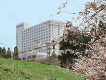 春からは桜、スイセン、チューリップなど、お花前線が続きます♪