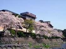 春の外観 桜と音信川。 是非,遊歩道の散策をお勧めします