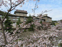大谷山荘前の桜の様子