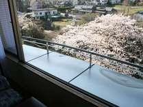 客室からの景観一例