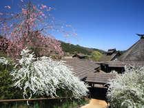かやぶきの郷(春)郷内は四季折々の様々な草花で彩られます。