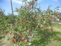 期間限定 秋!立科産ふじりんごの木 収穫宿泊プラン