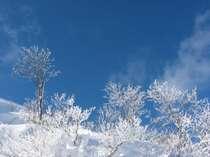 冬の寒さは厳しいけど ステキな樹氷に出会える