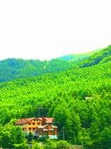 新緑の山岳ホテル