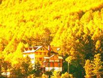 カラマツ映える黄金色の秋
