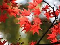 ☆紅葉を満喫☆ 温泉三昧!おにぎり弁当付きプラン