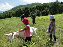 ヤギと草原のお散歩! ヤギってかわいいね(*^_^*)