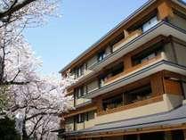 桜満開の花伝抄
