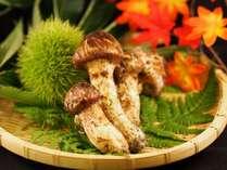 「秋味 松茸」当宿自営の青果市場直送です。