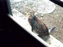 「いらっしゃい」と可愛いネコが出迎える