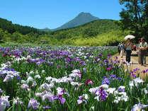 神楽女湖の花菖蒲。気持ちのいい高原にあり梅雨のうっとおしさから解放される爽やかさです。