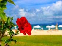 【じゃらん限定】エメラルドグリーンの海とやんばるの森に囲まれた楽園リゾート/連泊特典付