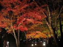 長瀞の紅葉は11月中旬から見頃です◇月の石もみじ公園・紅葉ライトアップ・送迎付プラン
