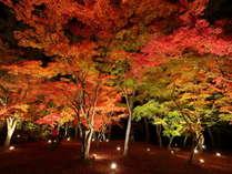 夜は長瀞の紅葉名所のライトアップへ送迎。昼も青空と紅葉とのマッチングをお楽しみください。