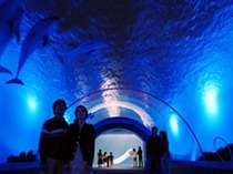 【4つの水族館とアトラクションを楽しもう】横浜八景島シーパラダイスワンデーチケット付プラン☆