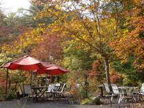 庭の紅葉は10月下旬頃 カエデやどんぐり 白樺などなど 秋色に染まります