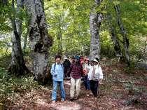 ブナの森散策