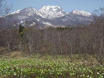 妙高山とミズバショウ