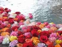湖上露天風呂「夕陽」に浮かぶバラで癒しを~