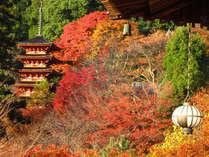 奈良へ紅葉狩り♪重要文化財と紅葉の競演に感動