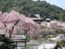 お花見で春を満喫♪桜の名所、長谷寺をふらっと観光しませんか?<2食付>