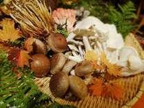 【30周年謝恩企画】≪恵み≫を超える秋の特別グルメディナープラン