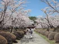 【ゴールデンウィークに桜!?】 遅い春を満喫 特選フレンチプラン(1泊2食)