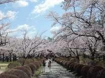 【超早割】桜咲くゴールデンウィーク!連泊超早割りで人気のフレンチコースディナーが2,160円引き