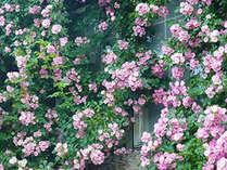 【期間限定】梅雨だからおすすめ!花と新緑に溢れる蓼科高原満喫プラン