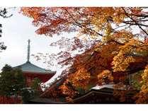 ◆高野山の紅葉:見ごろは毎年10月末から11月中頃。高野山まで片道約1時間です。