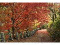 ◆吉野山・高城山の紅葉:標高702m。休憩所が整備され、吉野連山の眺めが楽しめます。