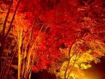 ■紅葉■秋は紅葉がとってもキレイです♪もみじ公園では11月中夜のライトアップもございます*