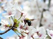 ★宿でお花見★はわい温泉で春の温泉旅を満喫♪(2食付)