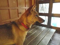 *館内で「ゆき」という名の犬を飼っています。人懐っこくて吠えないのでご安心ください。