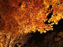 【幻想的な紅葉ライトアップ】 特典付☆秋の山中湖と富士山を満喫♪