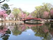 中央公園池の周り