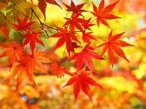 もみじの郷【11月下旬~】紅葉色づく木々に囲まれたもみじの郷をハイキング♪