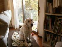 当館の看板犬パール