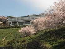 G 4月のお値打ちプラン!『桜ぷらん アイスもなか付』 桜が楽しめなかったら……さらに特典付けます!