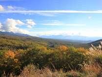 【周辺】ビーナスラインの眺望スポット。シラカバ、ダケカンバ、モミジ、そしてカラマツなどが山を彩る。